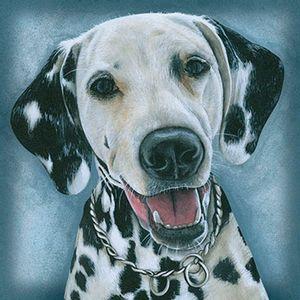 Papel-Transfer-30x30-Cachorro-Dalmata-PT30-025---Litoarte