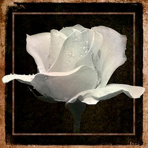 Papel-Decoupage-Arte-Francesa-Rosa-I-AFQ-358---Litoarte