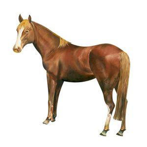 Aplique-Decoupage-8cm-Cavalo-APM8-659---Litoarte