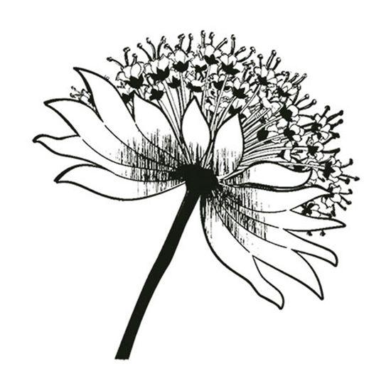 Carimbo-em-Borracha-Flor-Dente-de-Leao-CLP-037---Litoarte