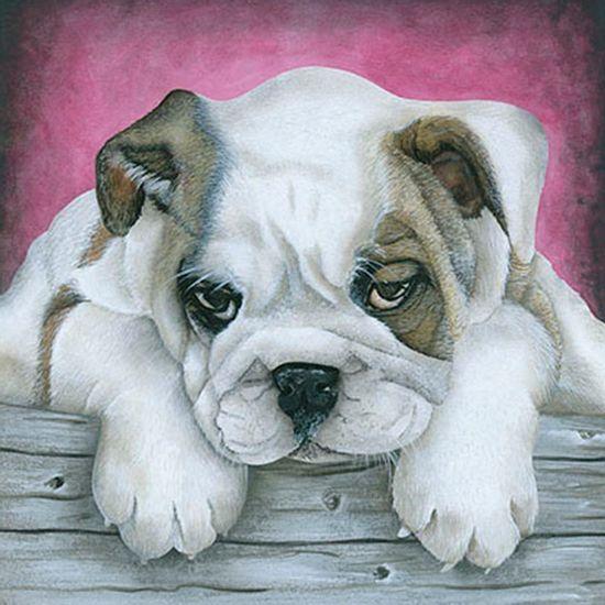 Papel-Transfer-30x30-Cachorro-Bulldog-PT30-023---Litoarte