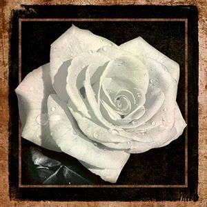 Papel-Decoupage-Arte-Francesa-Rosa-II-AFQ-359---Litoarte