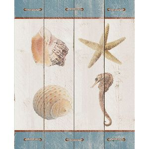 Placa-Decorativa-Nautica-Concha-Estrela-24x19cm-DHPM-173---Litoarte