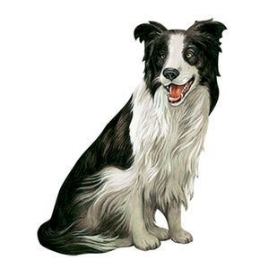 Aplique-Decoupage-8cm-Cachorro-Border-Collie-APM8-653---Litoarte