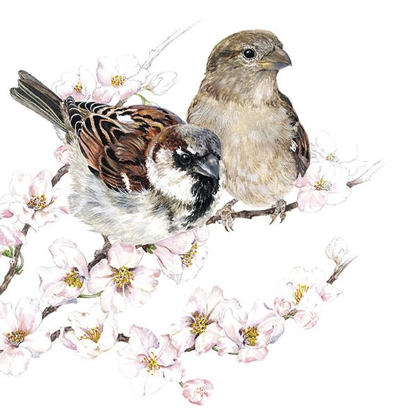 Guardanapo-Decoupage-Ambiente-Luxury-SPARROWS-BLOSSOM-13313895-2-unidades-Passaros