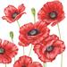 Guardanapo-Decoupage-Ambiente-Romantic-Poppy-13308505-2-unidades