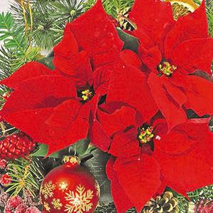 Guardanapo-Decoupage-Ambiente-Natal-Red-Poinsettia-33304680-2-unidades