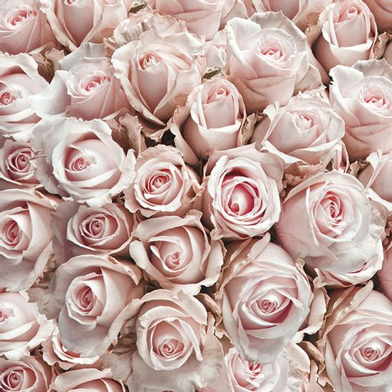 Guardanapo-Decoupage-Ambiente-13311450-Pastel-Roses-2-unidades