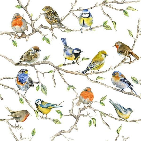 Guardanapo-Decoupage-Ambiente-13314975-Birds-Meeting-2-unidades